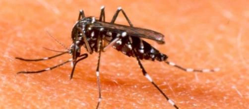 Laboratório francês iniciou comercialização de vacina contra a dengue