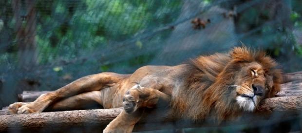 Zoológicos de Venezuela agonizan por escasez | POSTA - com.mx