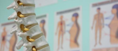 Blog | Back in Action Chiropractic - mauichiropractic.com