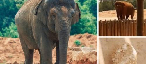Elefante arremessa pedra e mata criança em zoo no Marrocos   VEJA.com - com.br