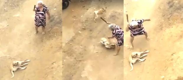 Vídeo mostra idosa espancando cachorro