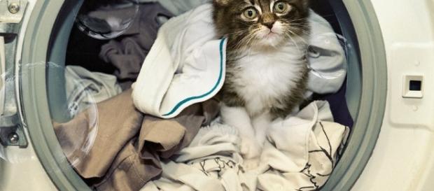 fotos   bobby, el gato que sobrevivió a una lavadora en marcha ... - scoopnest.com