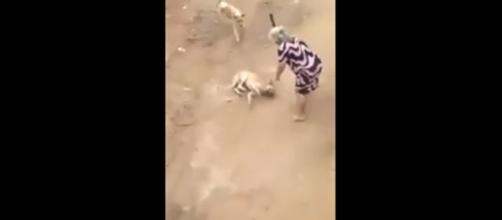 Idosa agride cão a paulada no Espírito Santo