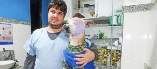 Marcos Lesqueves é o veterinário que está cuidando de cãozinho agredido