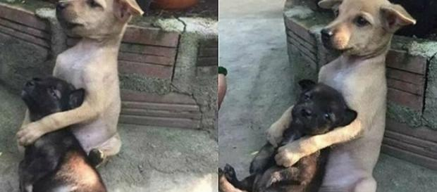 Cachorros emocionam o mundo - Foto/Reprodução