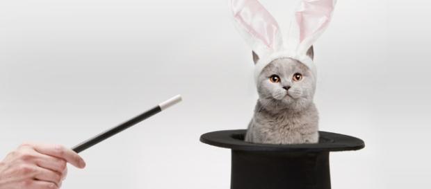 """Com aumentos sucessivos, montadoras criam novo modelos de """"gato por lebre"""" no mercado de automóveis"""
