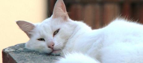 Les chats préfèrent la musique rythmée