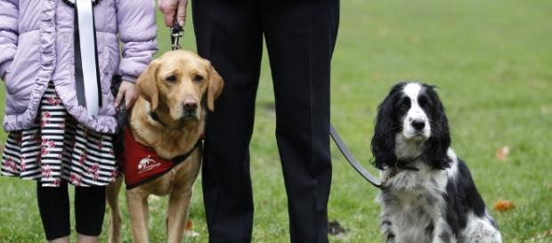 Cães detetam cheiro de diabetes em seres humanos - com.br