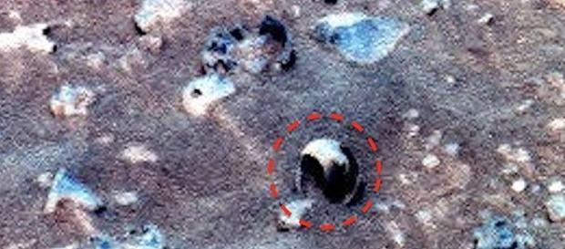 Presunta conchilia individuata su Marte.