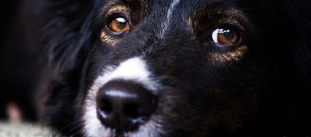 O olhar de um animal traduz todo seu amor