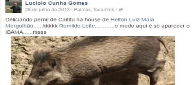 Animal abatido por Lucíolo (Foto:Reprodução)