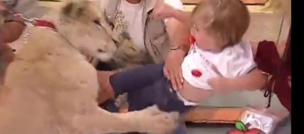 Momento em que o animal ataca a criança