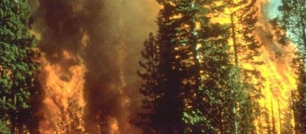 A wildfire in California. Bureau of Land Management, Wikimedia Commons