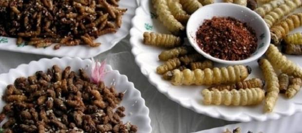 Existen recetas muy variadas y ricas para cocinar todo tipo de insectos