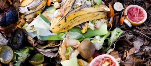Sprechi alimentari: Senato approva legge
