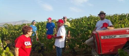 Viaggio tra i lavoratori italiani sottopagati nei campi pugliesi
