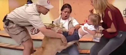 Leão ataca criança em programa ao vivo