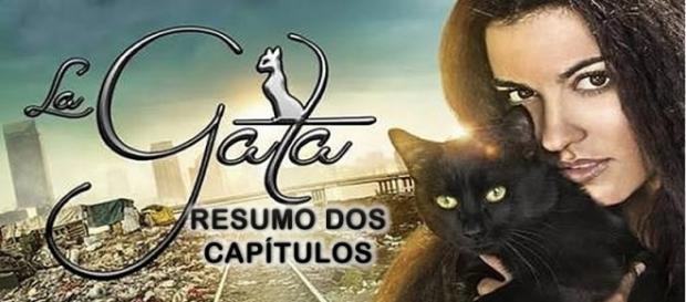 Resumo dos capítulos de 'A Gata'