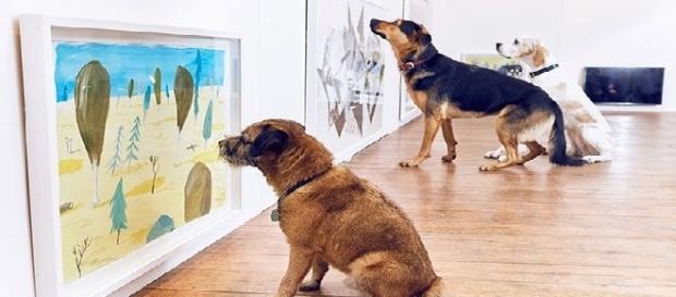 Uma exposição de arte que é do jeitinho que seu cão gosta