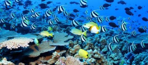 Obama might create the world's largest marine reserve in Hawaii ... - inhabitat.com