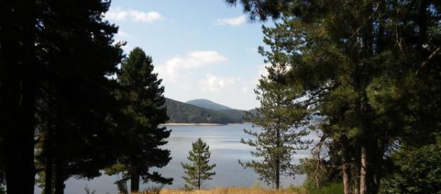 Uno scorcio del lago Arvo tra gli alberi