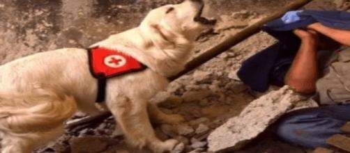 Asia, la cagnolina morta di fatica per salvare i terremotati
