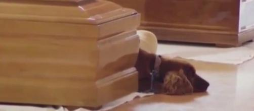 Perro no quiere dejar a su amo fallecido en el terremoto de Italia