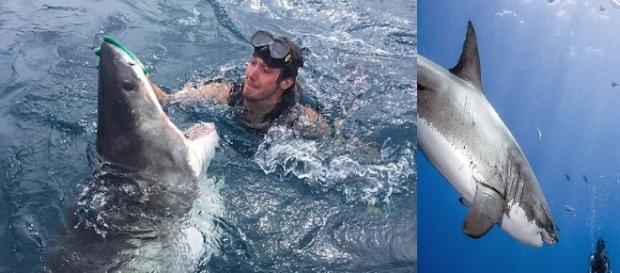 Imagem de mergulhador acariciando nariz de tubarão