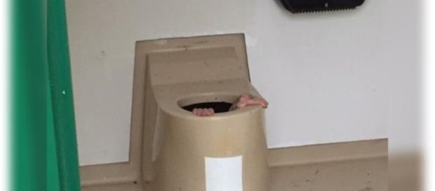 Jovem fica preso dentro do vaso, ao tentar recuperar um celular
