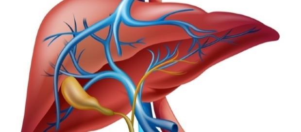 7 razones para desintoxicar el hígado - lavidalucida.com