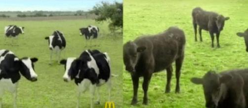 Cyriak Harris accuses McDonald's of copying his work for an ad ... - businessinsider.com