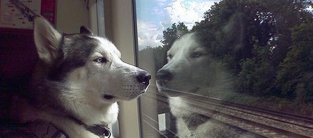Come possono viaggiare i cani in treno