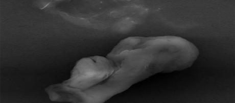 Semelhante a 'fumaça de charuto' microrganismo foi notado na estratosfera (Universidade de Sheffield)