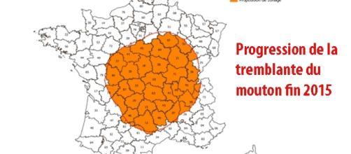 La fièvre catarrhale ovine progresse fortement en France