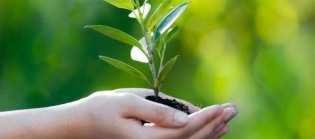 Otto modi per educare i bambini verso il rispetto per l'ambiente