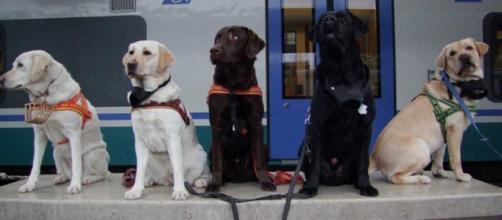 Trenitalia: viaggiare con cani di taglia media e grande a soli 5 euro per tutta l'estate 2016