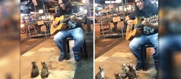Músico tem interessante plateia de gatos