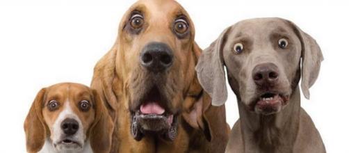 Cani: le nuove regole dal ministero della salute