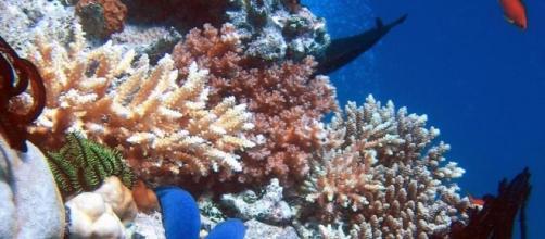 Estinzione di massa di animali marini a causa dell'uomo - La Stampa - lastampa.it