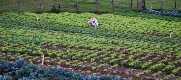 Conoce el modelo de cultivo integral - VeoVerde - veoverde.com