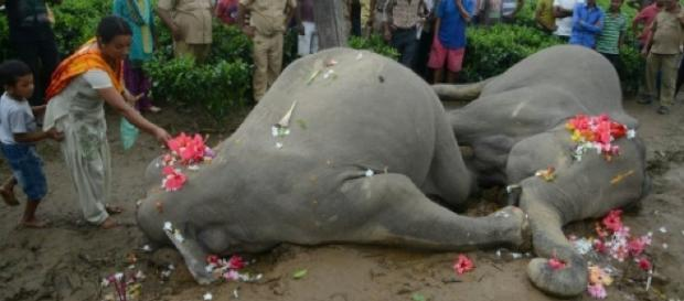 Depeche - Deux éléphants électrocutés dans l'est de l'Inde - France 24 - france24.com