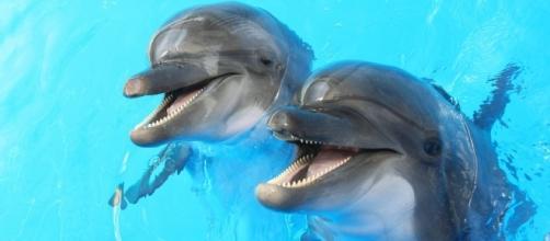 Os golfinhos, segundo pesquisadores, emitem sons em sequências que formam frases
