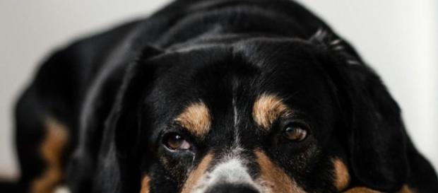 Os animais cometem suicídio? - BBC Brasil - bbc.com