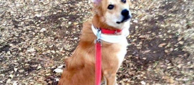 Lucy, a cadelinha que motivou a separação.