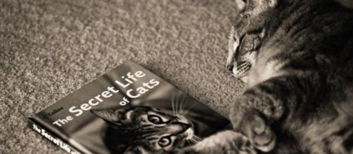 La vie secrète des chats en version adaptée sur TF1