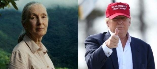 Dr Jane Goodall und Donald Trump (Quelle: ABC News)