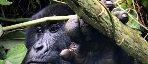 iPhone 7 Camera Review: Rwanda — Austin Mann - austinmann.com