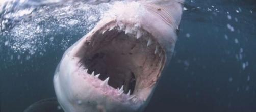 Three shark attacks on one Florida beach within three hours. Photo: Blasting News Library - jach - SFGate - sfgate.com