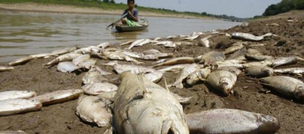 Laboratório da UEA analisará mudanças climáticas na Amazônia ... - acritica.com