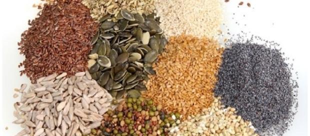 Semi OGM per l'alimentazione umana e animale